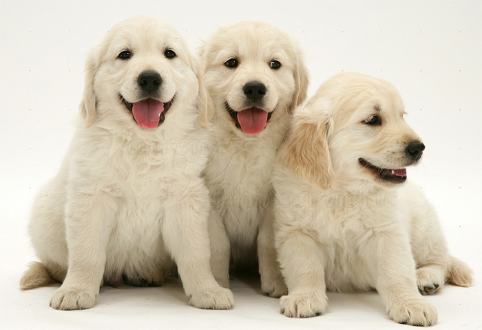 Adorable pups