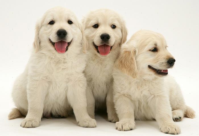 Adorable pups